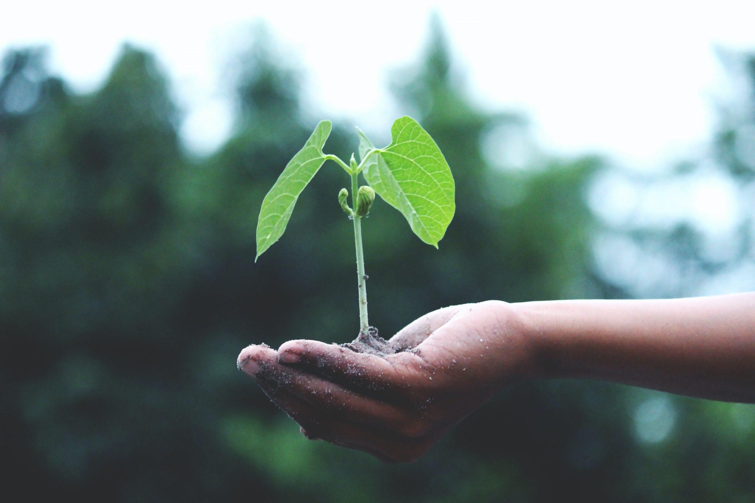 Ilustracja rosnąca roślina na dłoni